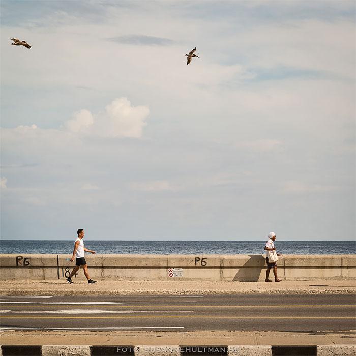 Pelikaner flyger och människor går