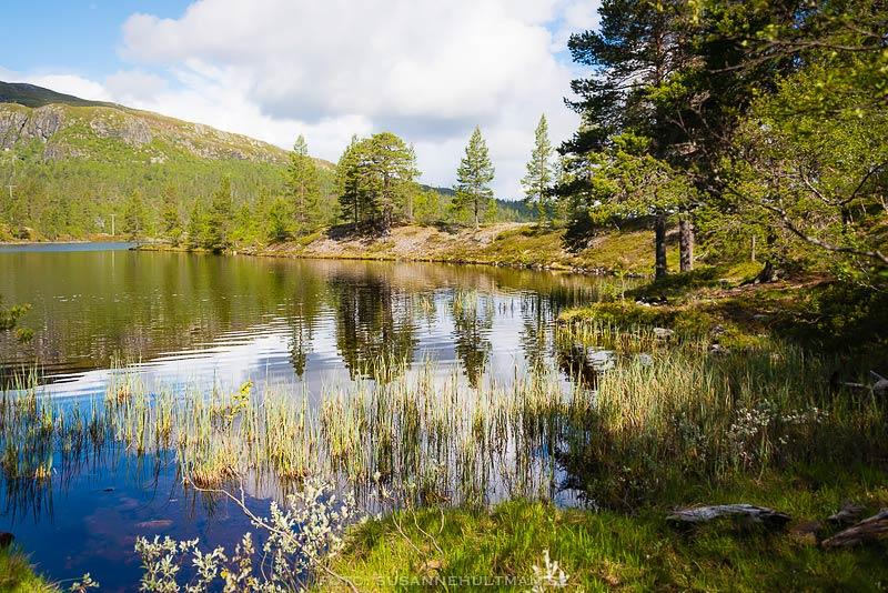 Spegelblankt vatten och skog