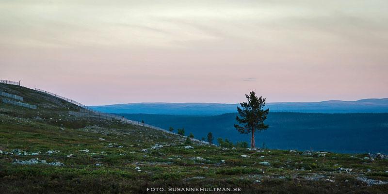 Ensamt träd med fjäll i bakgrunden