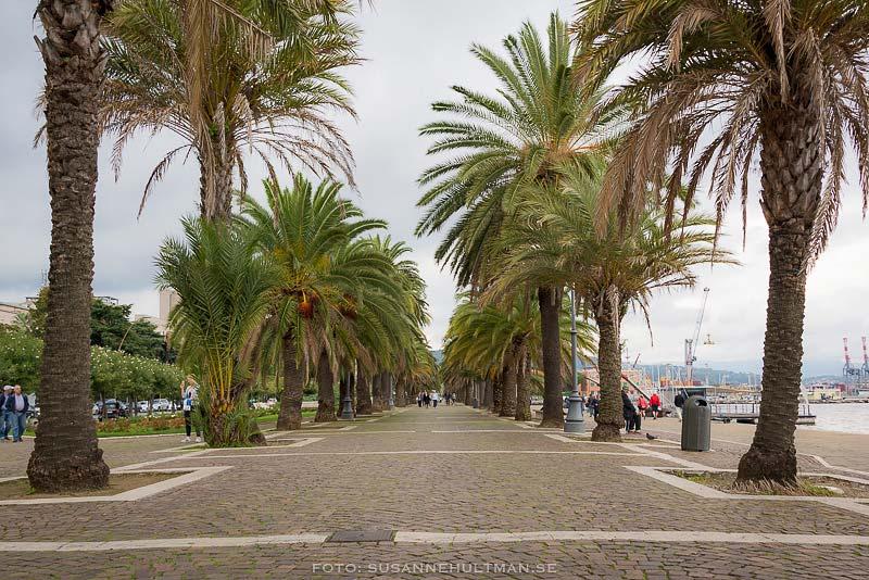 Palmkantad strandpromenad