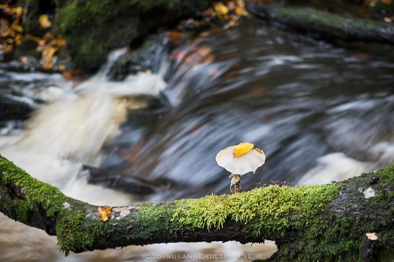 Svamp med löv vid vatten