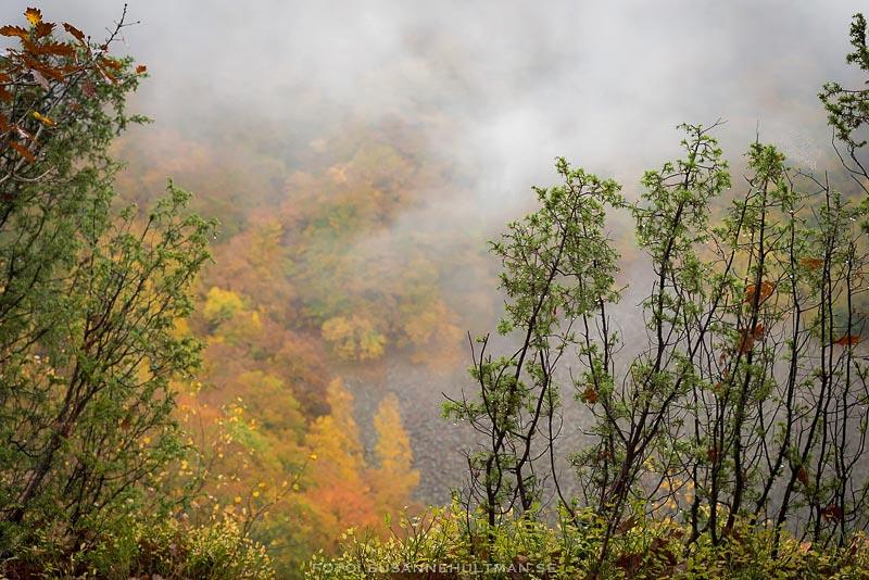Dimma över höstfärgade träd.