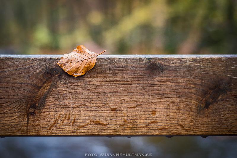 Löv på träräcke