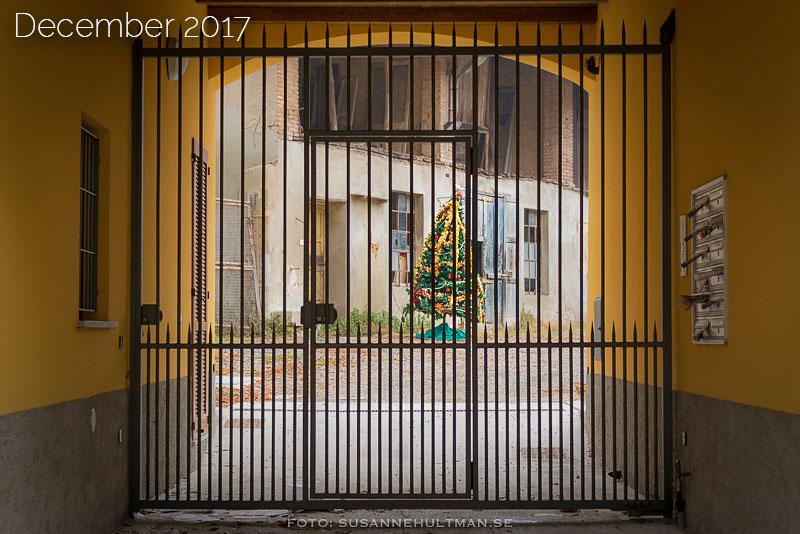 Julgran bakom stängd grind