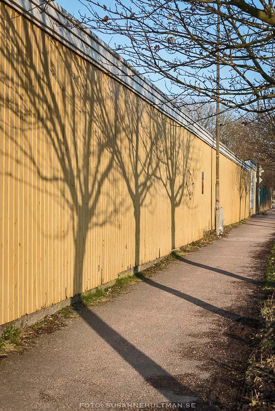 Skuggor av tre träd på gult plank