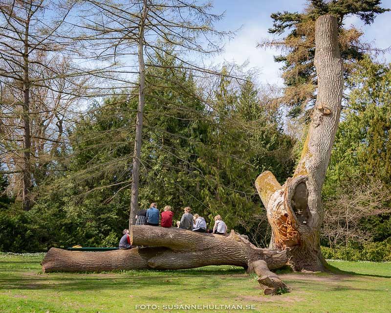 Barn som sitter på en trädstam