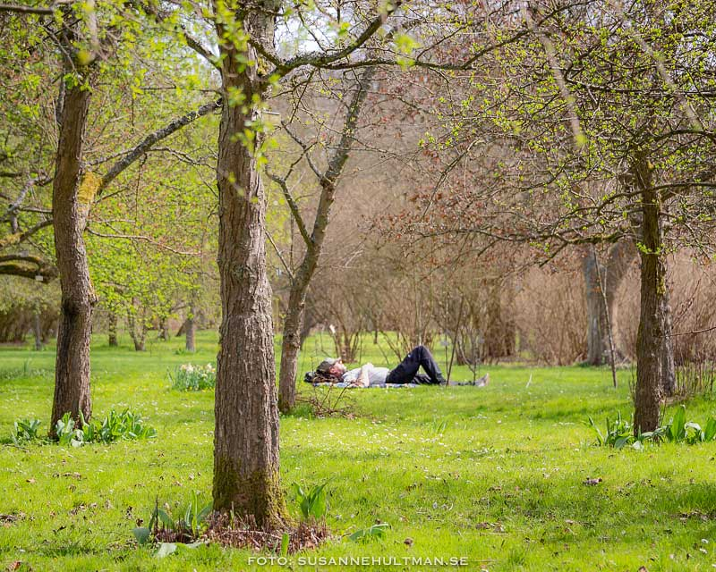Man som ligger i gräset mellan träd