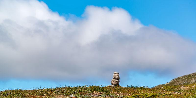 Stenröse mot blå himmel