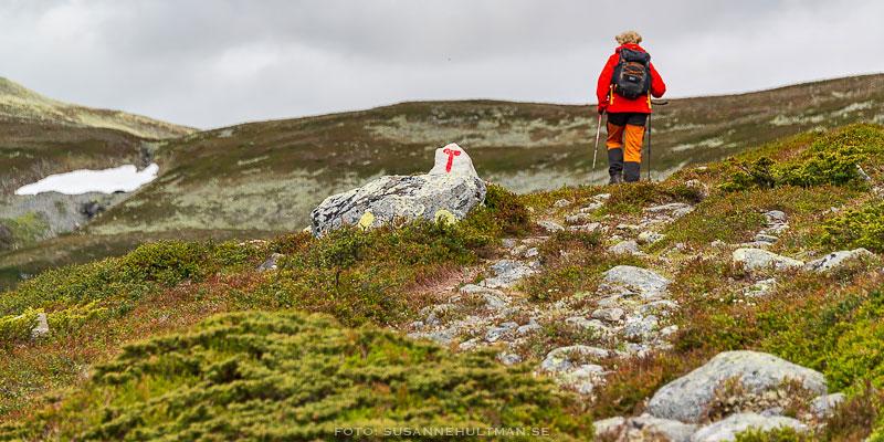 Rödklädd vandrare på stig och snö i bakgrunden