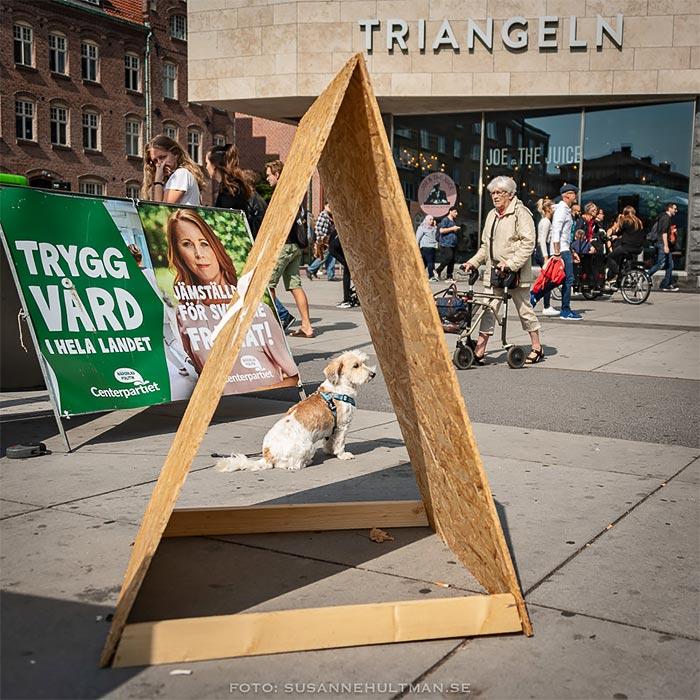 Hund inramad av en triangel.
