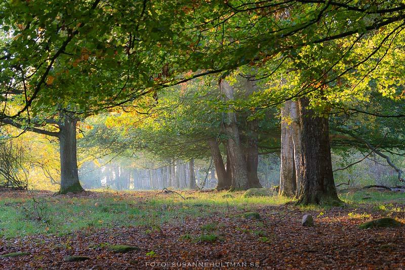 Träd och solljus