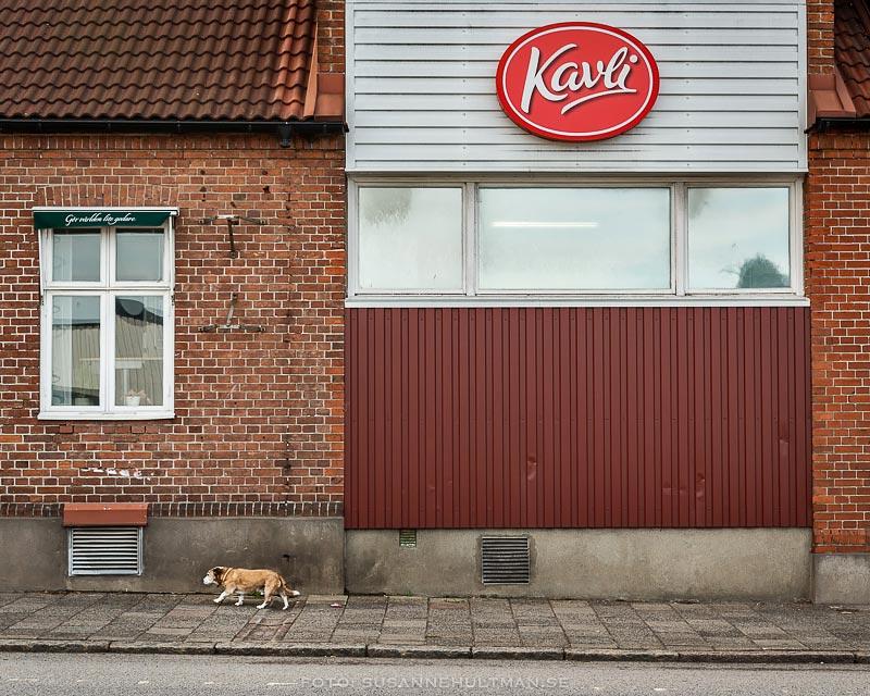 Hus med Kavliskylt och en hund som går längs väggen.