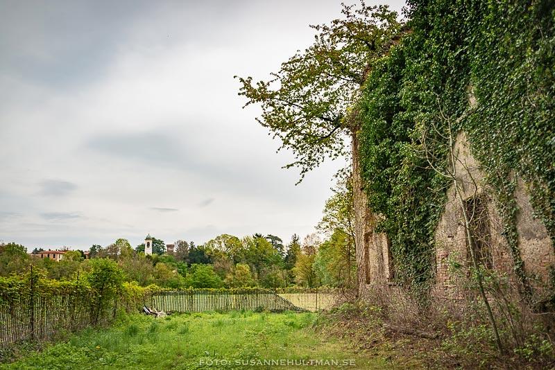 Ruin överväxt av grönska