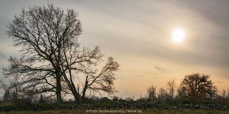Solen bakom dis och trädsilhuetter.