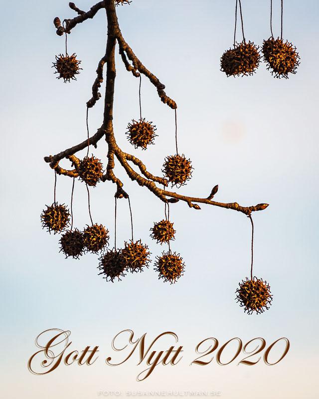 """Taggiga bollar på grenar och texten """"Gott Nytt 202"""""""