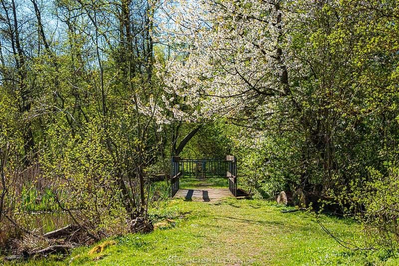 Stig mor bro med blommande träd.
