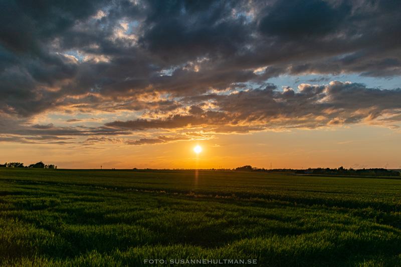 Solnedgång över en åker