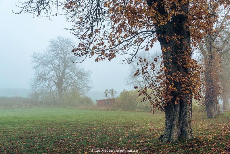 Träd med hus i dimma i bakgrunden.