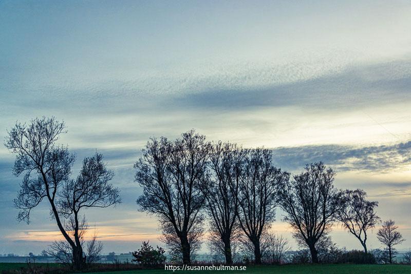 Kala träd mot solnedgångshimmel
